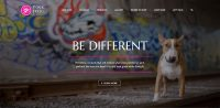 website design, web designer, graphic designer